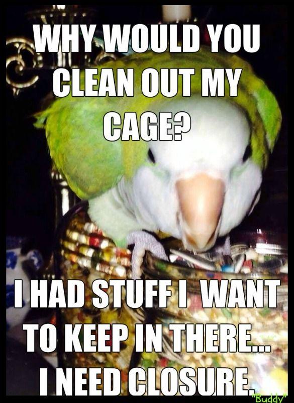 Clean It Up Cockatiel Funny Parrots Parrot