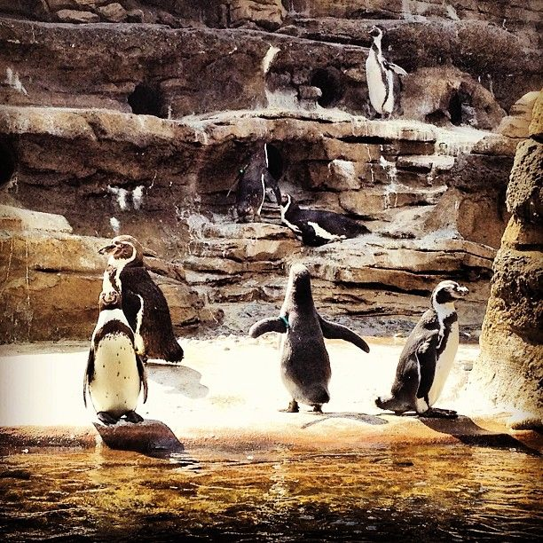 Nationally Award Winning Woodland Park Zoo Is A 92 Acre Zoological Garden Featuring More Than 1 000 Animals Representin Woodland Park Zoo Zoo Zoological Garden