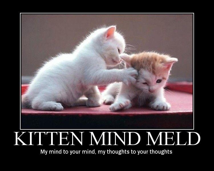 Kitten mind meld