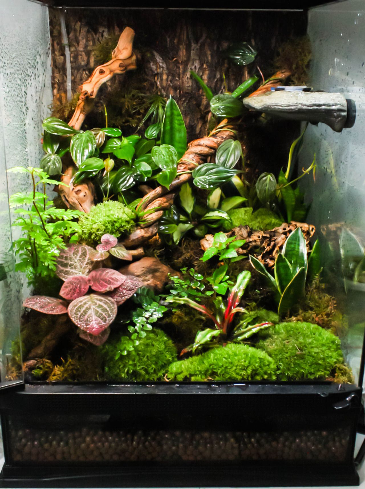 i got a bit moss crazy on my planted vivarium the crested gecko likes it though cages. Black Bedroom Furniture Sets. Home Design Ideas