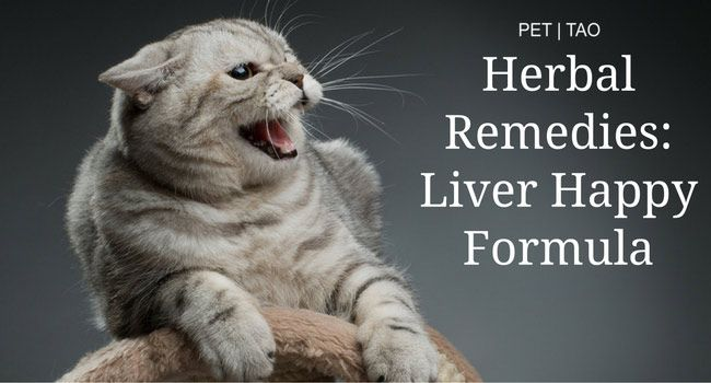 Liver Happy Herbal Remedy For Grumpy Cats Pet Tao Holistic Pet Products Holistic Pet Grumpy Cat Cats
