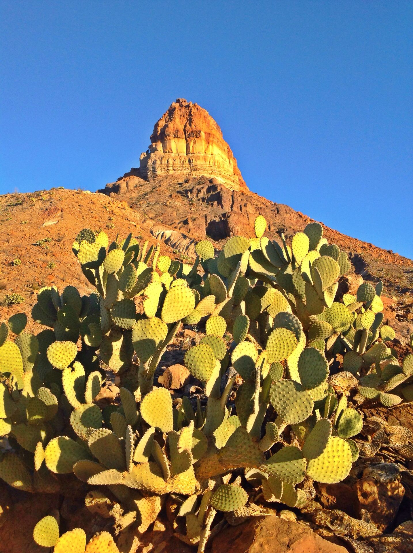 """There are about 1,000 kinds of plants in the Big Bend, and one or another is blooming practically all year around. From February to May intense color makes its way from the lowlands to the mountaintops."""
