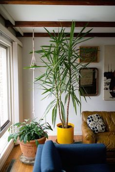A Beginner's Guide to Houseplants–all homes need plants. They look great with modern and vintage decor.