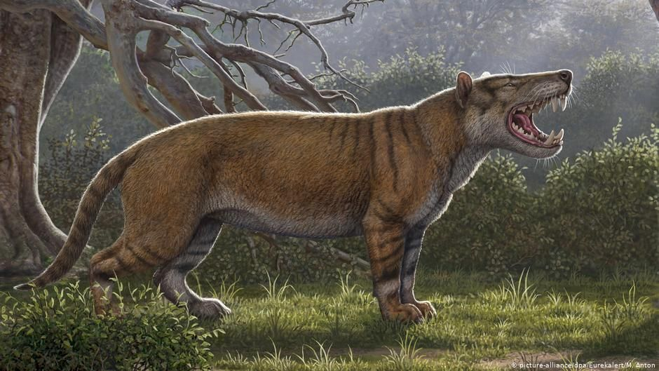 بتوقيت بيروت اخبار لبنان و العالم Extinct Animals Canine Extinction