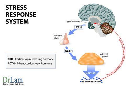Fundamentals Of Adrenal Fatigue Dr Lam Coaching Stress Response Cortisol Stress Symptoms