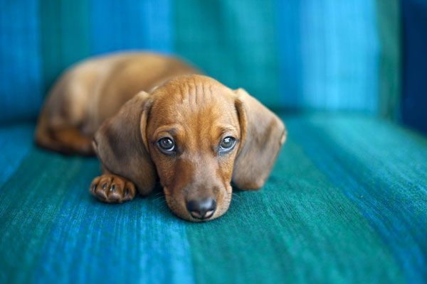 puppy plz like or repin! Dogs, Rescue dogs, Embrace pet