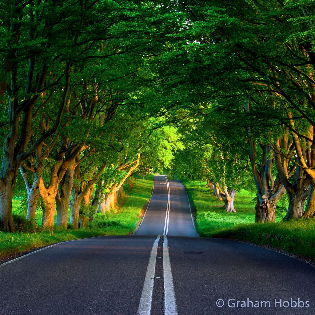 Kingston Lacy Beech Avenue In May - Re-edited For