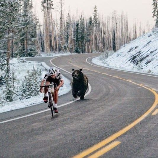 Método infalible de entrenamiento  #bicicletas #ridelife #roadbikes #secondhand #biking #fitnessworld #bikelife #appstore #segundamano #googleplay #enbici #instabikes #ride #bmx #motivation #mountainbike #mtb #weridebikes #coolapps #bicicletta #fixie #cycling #igersbike #velo