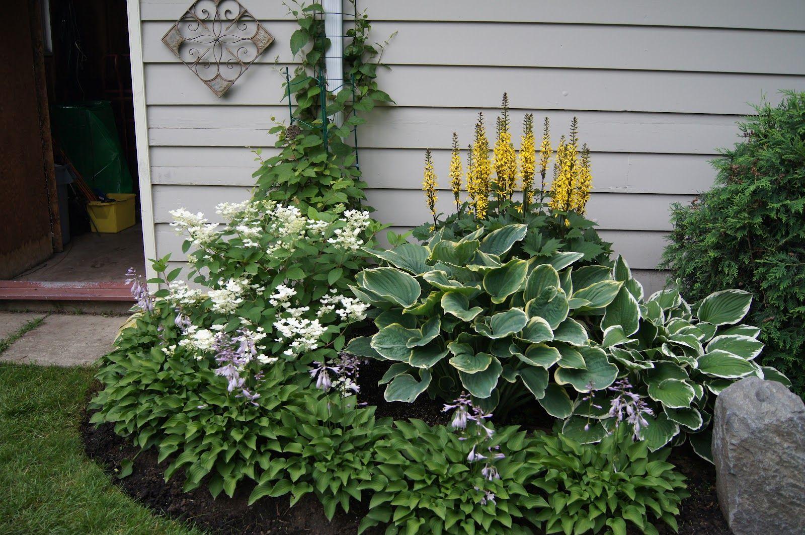 Small Hosta Garden Something For The Backyard Hosta Gardens