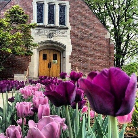 Tulips in front of Alumni Memorial Chapel at Michigan State University, East Lansing, MI