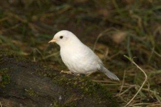 Photo of A-Z list of 125 rare albino animals [Pics] #albinoanimals – A-Z list of …