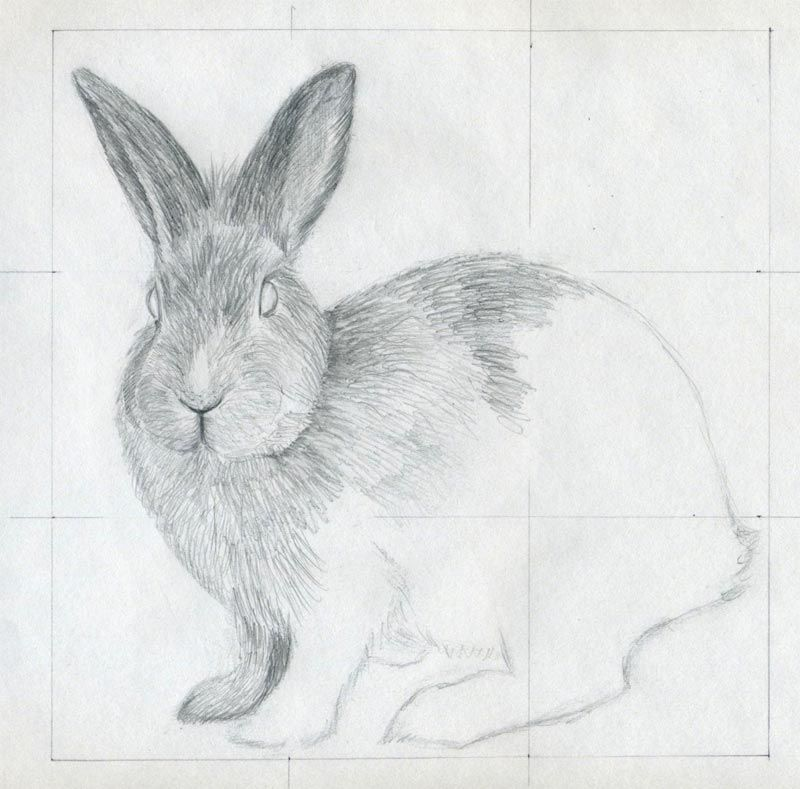 How To Draw A Rabbit In Pencil Simple And Easy