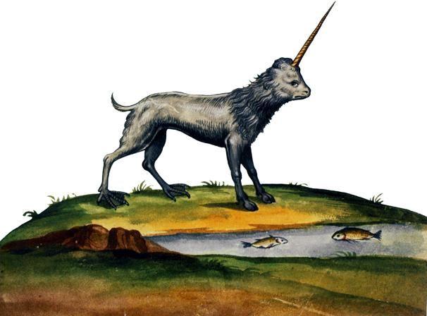 1599-1603  Ulisse Aldrovandi  Camphurch. #Animals #Conocimiento @deFharo