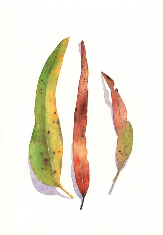 Eucalyptus Leaves Watercolor Painting Watercolor Plants