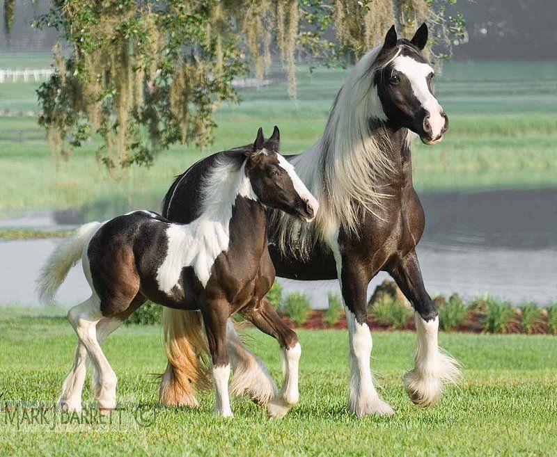 Pin Auf Tiere Pferde