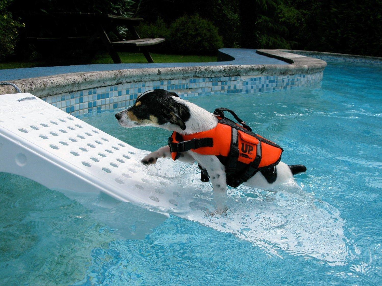 Resultado de imagem para rampa cães piscina madeira