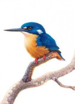 Azure Kingfisher Watercolor Bird Bird Artwork