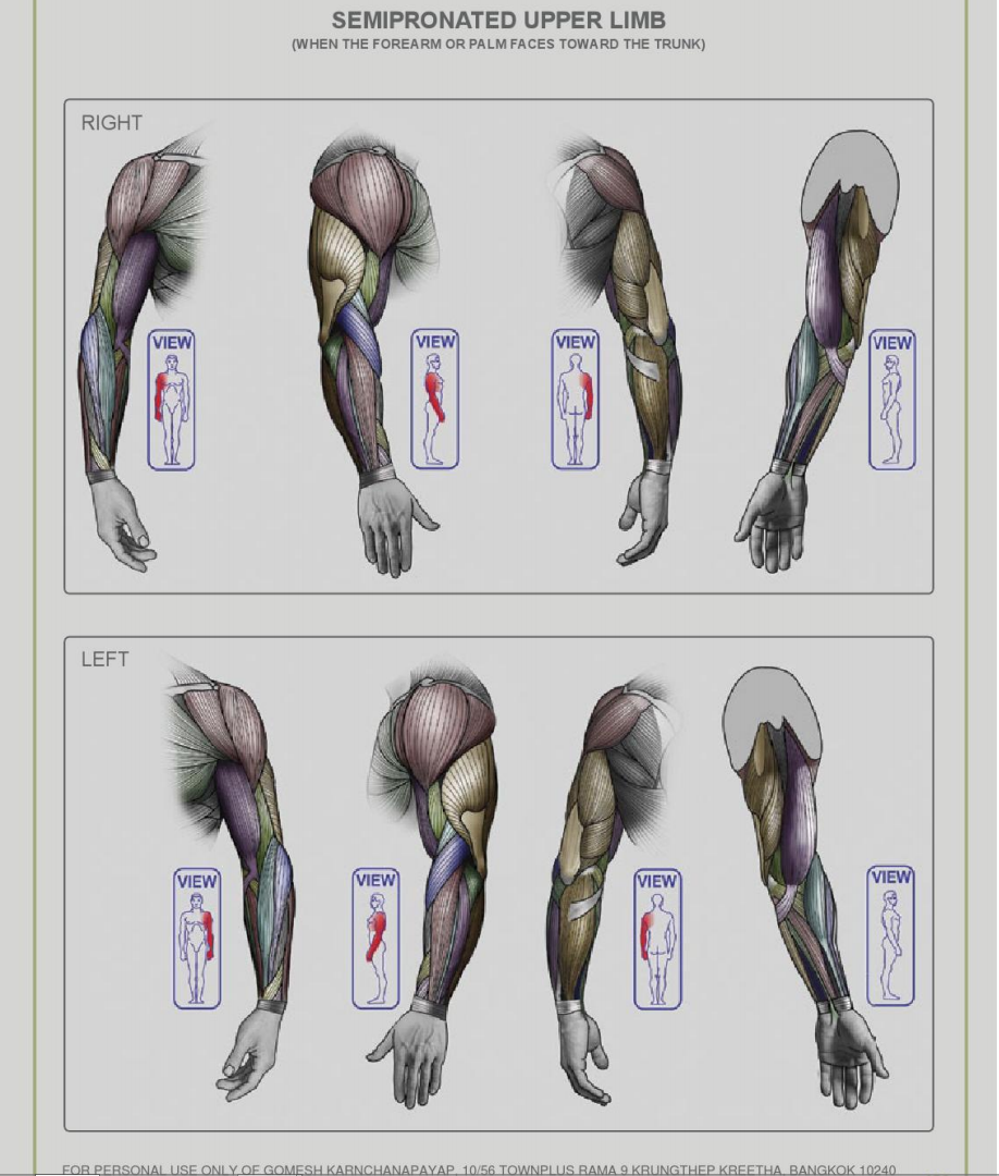 Magnificent Human Anatomy For Artist Ideas - Anatomy and Physiology ...
