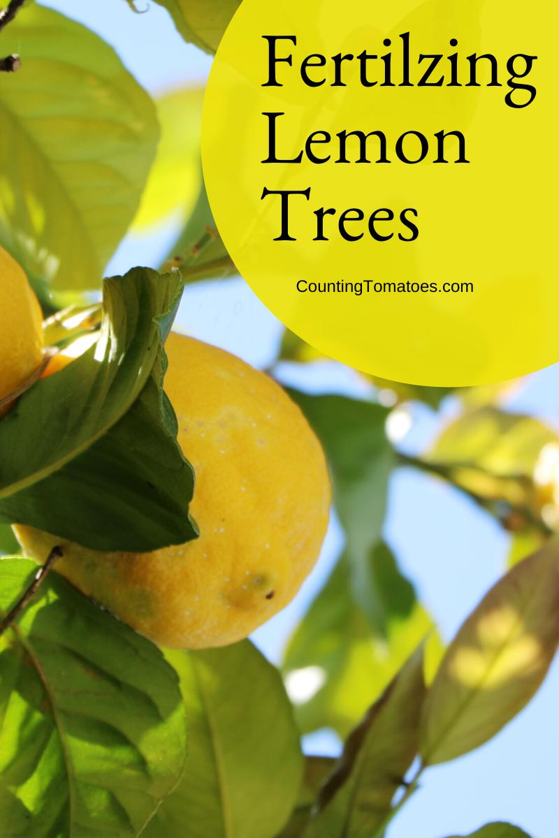 Fertilizing Lemons Learn About Fertilizer For A Lemon Tree Lemon Tree Potted Papaya Tree Growing Lemon Trees