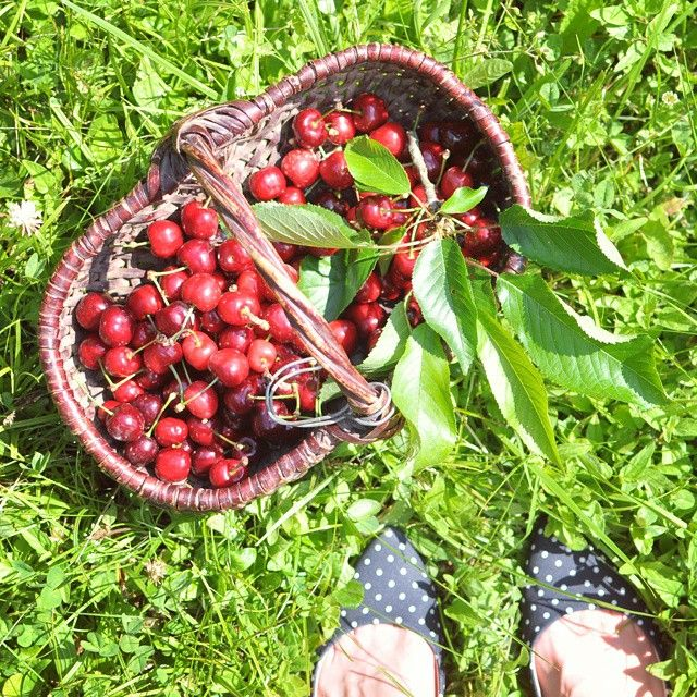 isabelle reynier, cydographie's instagram | Last sunday in grandma garden  #happy #happytime #sunday #garden #green #nature #fruits #vegan #cherry #cerise #outdoor #summer #beautiful #yummy #food #instafood #simplefood #health #foodie