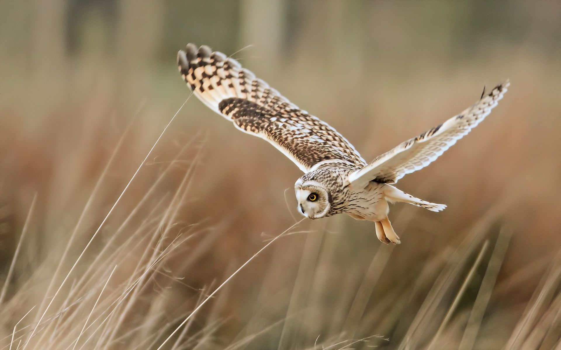 wallpapers of the day owl 1920x1200px owl pics