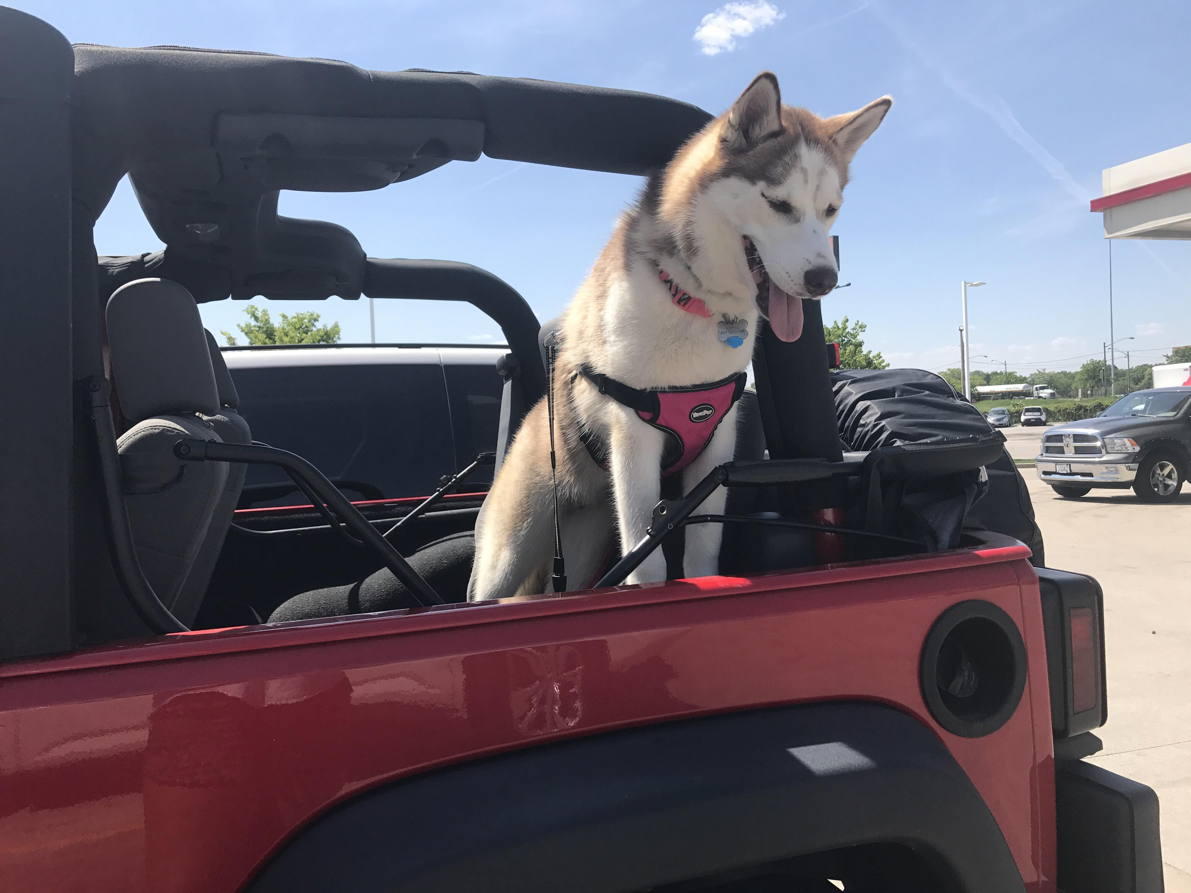Any Other Jeep Huskies Here Http Ift Tt 2s9ffcu Husky Funny