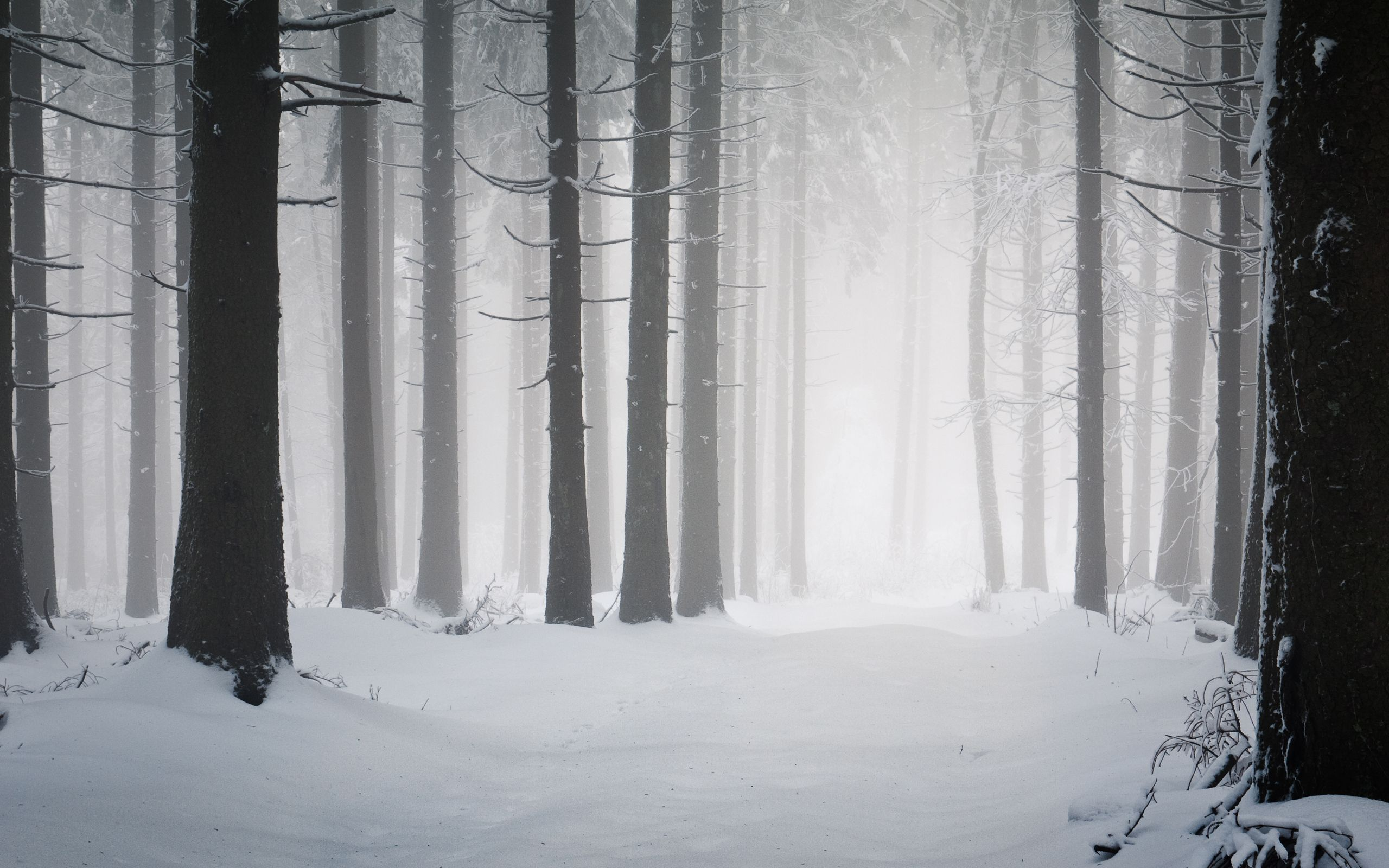 Landscape Snow Forest Snow Forest Snowy Forest Winter Forest