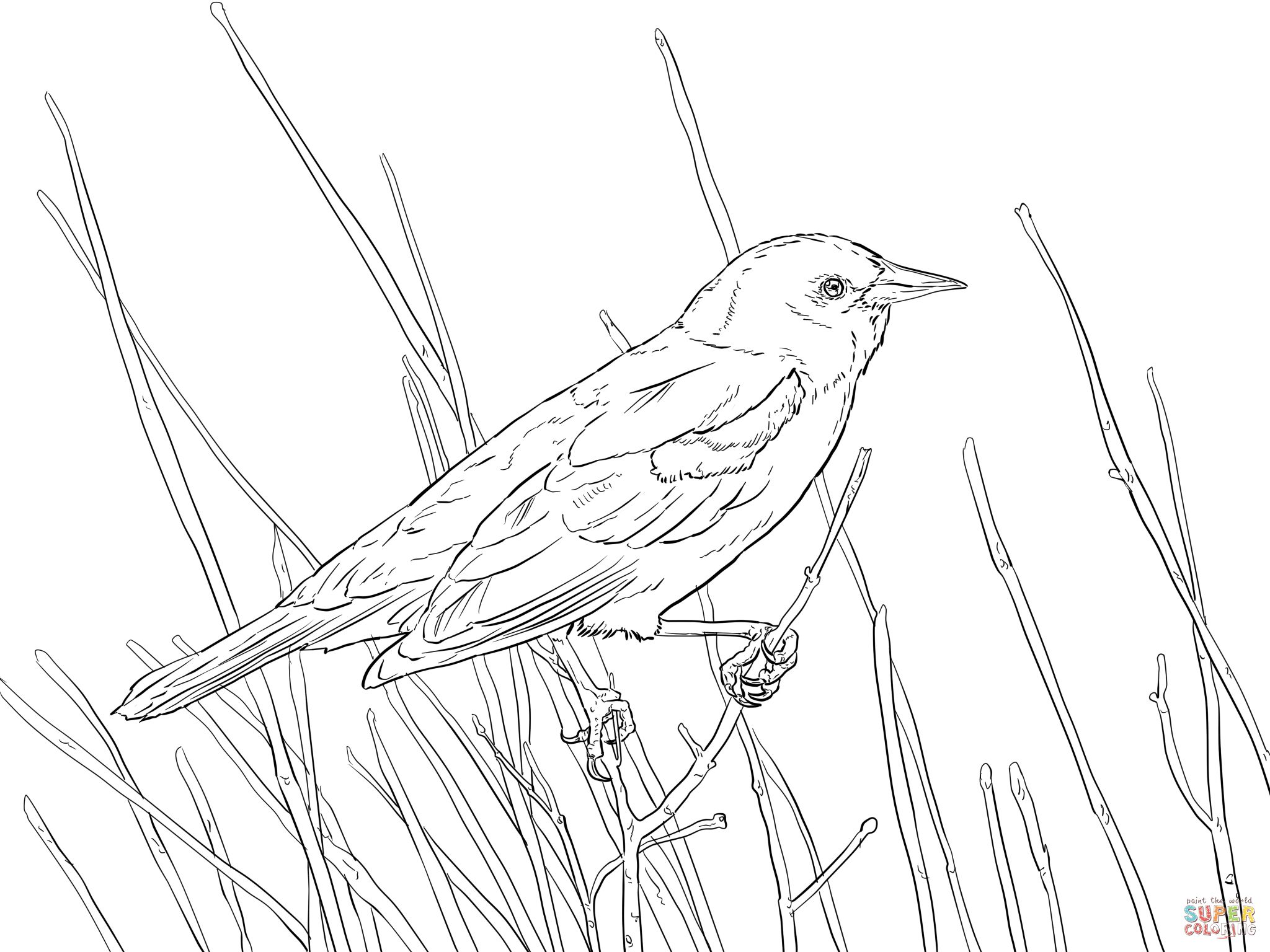 red wing blackbird drawing Google