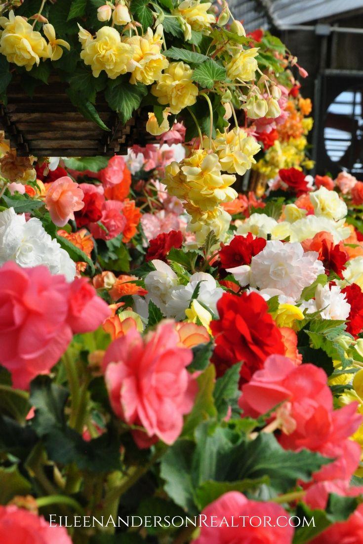 Gardens white flower farm flower farm and landscape designs mightylinksfo