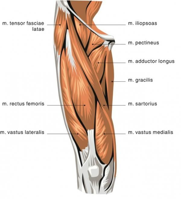 34+ Tight front thigh muscles ideas