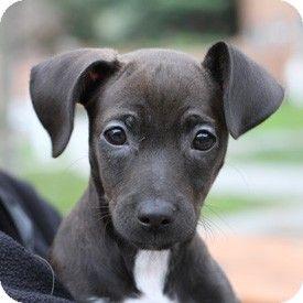 Marzipan Dachshund Beagle Mix At Arf Kitten Adoption Puppies Pets