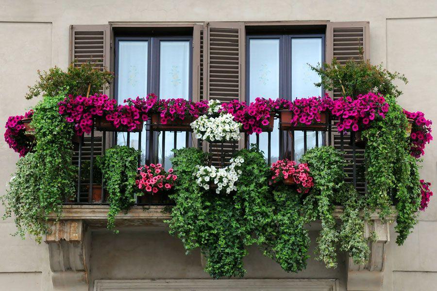 Cómo hacer un jardín en la terraza o balcón | Proyectos que intentar ...