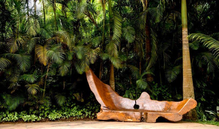 palmeiras inhotim - Pesquisa Google