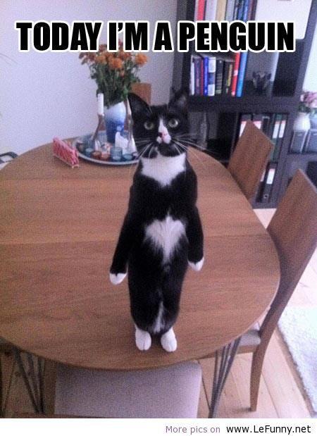 Penguin – Funny pic