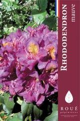 Rhododendron Marcel Menard Pot De 15 Litres