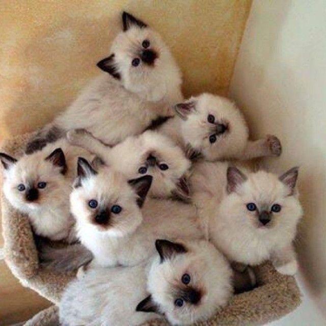 Chatons chats pinterest chatons chats et animal - Photo de chien et chat mignon ...