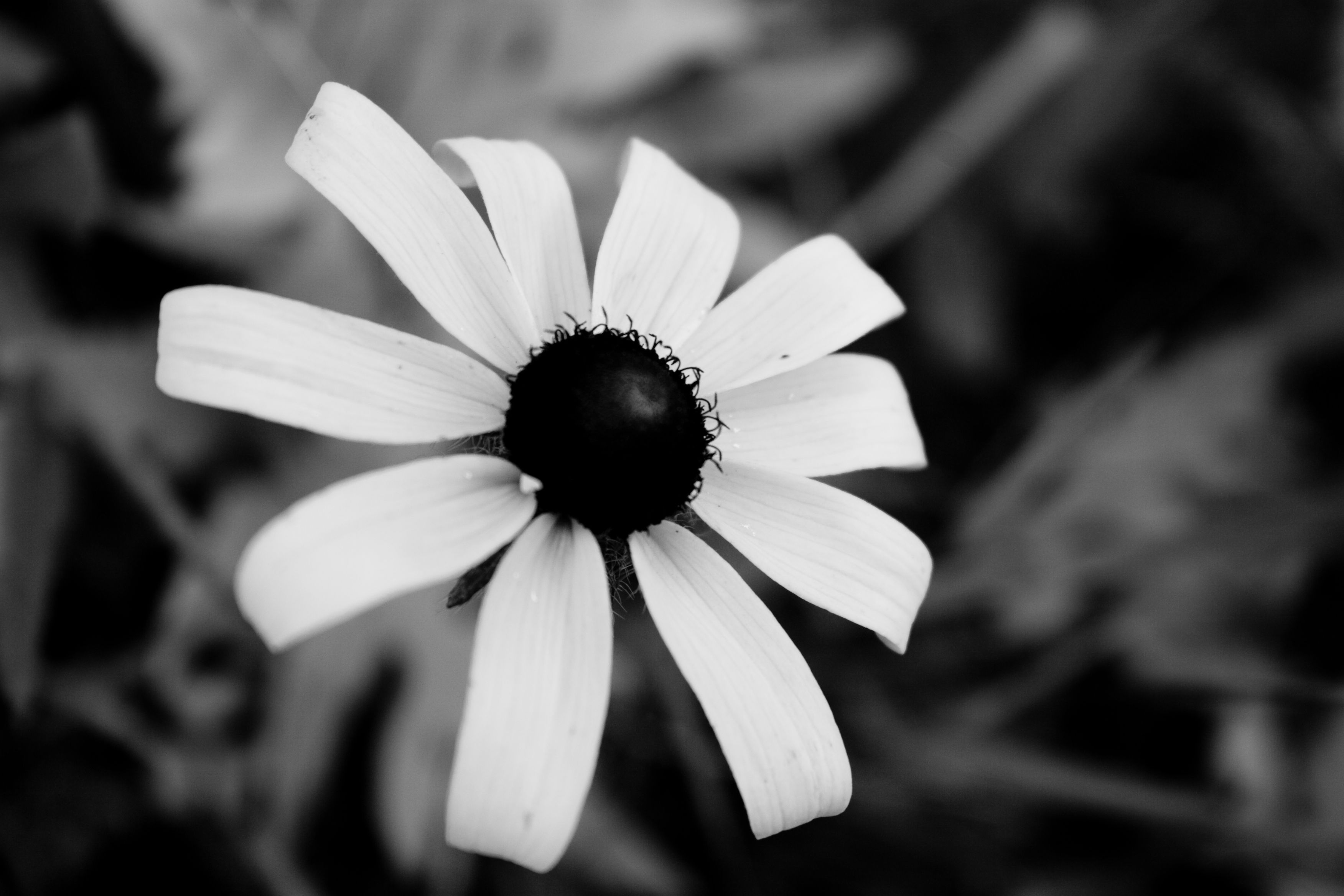 26 Best Pictures Of Flowers In Black White Images On Pinterest