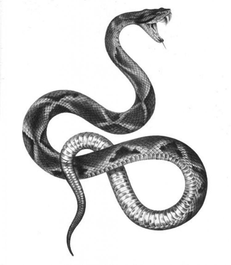Tattoo Arm Schlange 47 Ideen Ankletattoos 9