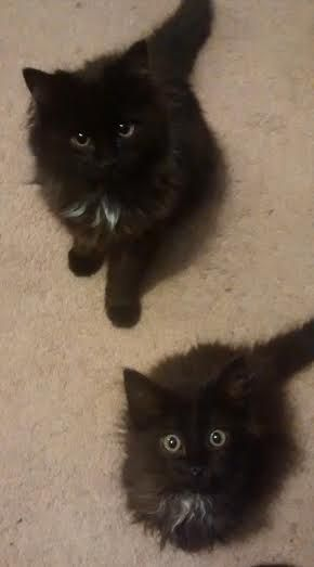 Begging, tag team style.