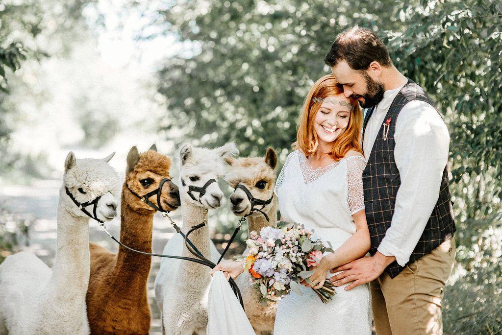 Labude Koln Hochzeitsinspiration Mit Brautpaar Und Alpakas Hochzeitsfotografie Boho Style Brautoutfit Mit Spitze Braut Hochzeitsbilder Hochzeitsinspirationen