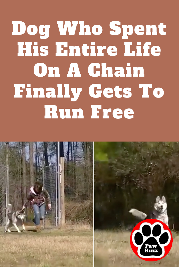 Dog Who Spent His Entire Life On A Chain Finally Gets To Run Free Dogs How To Plan Running