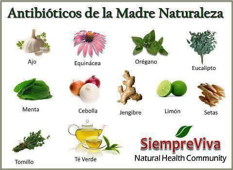 Resultado de imagen para dibujos de plantas medicinales ...