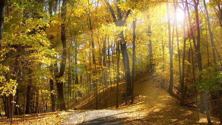 ormana sonbaharda ışık düşmesi