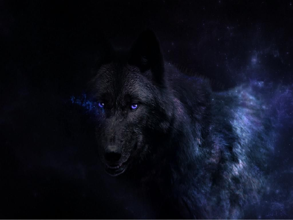 wolf wallpaper hd android 用の ウルフの壁紙hd wolf wallpapers apk