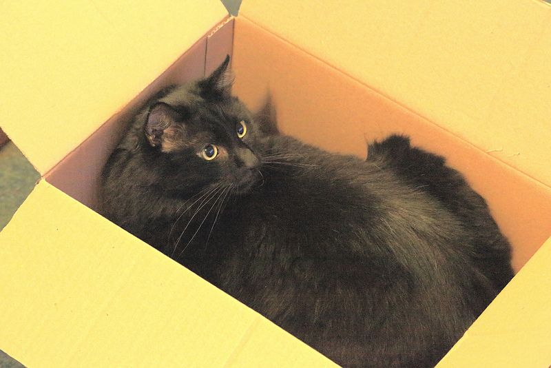 Cat in a cardboard box beautiful cats pictures cats