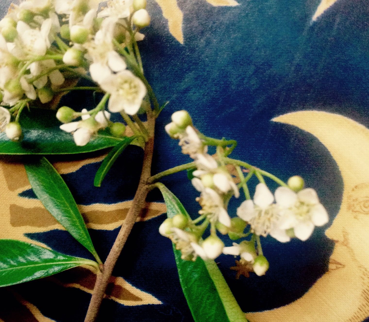 They Smell Like Tilapia Cute White Flowers From An Old Growth Bush