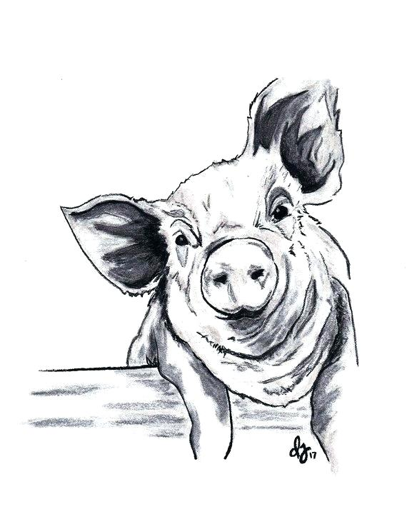 How To Draw A Pig Face : Drawing, Animal, Drawings, Sketches,