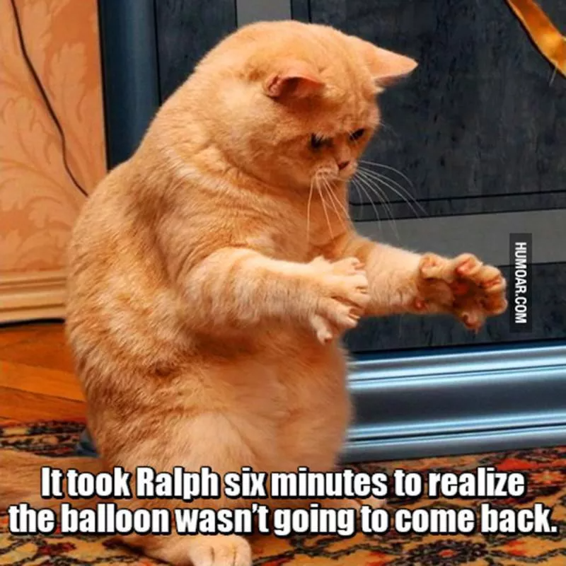 Cat Memes So Funny We Could Just Cry Always Pets Funny Cat Memes Cat Memes Happy Birthday Funny Cats