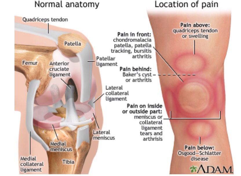 Knee anatomy fitness tips pinterest anatomy knee tendonitis knee anatomy ccuart Images