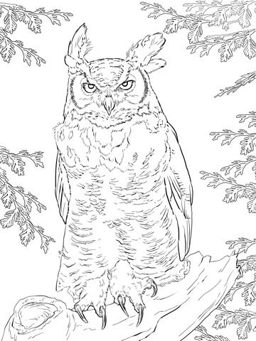 Realistic Great Horned Owl Coloring Page